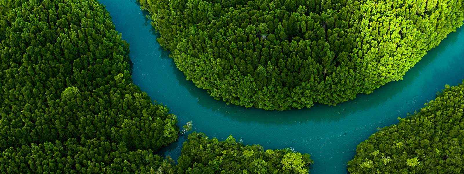 Aerial view of a river through a forest